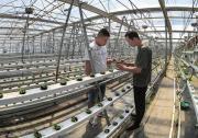 蔬菜全智能自动化生产