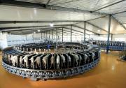 内蒙古盛健生物科技发力中国乳都羊奶产业