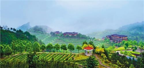 图为景色优美的福建安溪铁观音生态茶园。 (资料照片)