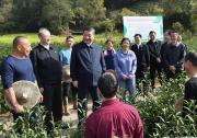 习近平察看武夷山春茶长势:把茶文化、茶产业、茶科技这篇文章做好