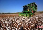 H&ampM、耐克们,对新疆棉花一无所知!