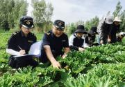发展特色产业 助力乡村振兴——兰州海关支持甘肃省外繁制种产业发展