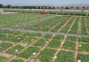 小种子打开农业大市场