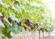 奏响乡村振兴新乐章,朗新能源数字化为宁夏农业添动力