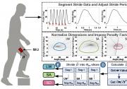 沈阳自动化所在外肌肉机器人领域取得新进展