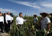 习近平:加快农业农村现代化 让广大农民生活芝麻开花节节高
