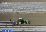 新疆:千万亩商品棉全面开耕播种