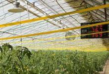 """北京昌平:""""智慧农业""""上线 温室自动化控制试验初见成效"""