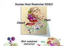 复旦大学生命科学学院李继喜团队在抗病毒免疫应答研究领域取得重要进展